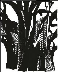 Consultoria arboricultura_doctorarbol