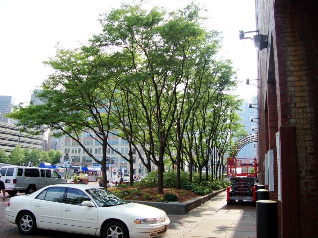 arbre calle_doctorarbol