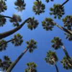 estudi biomecànic de palmeras_doctorarbol 3