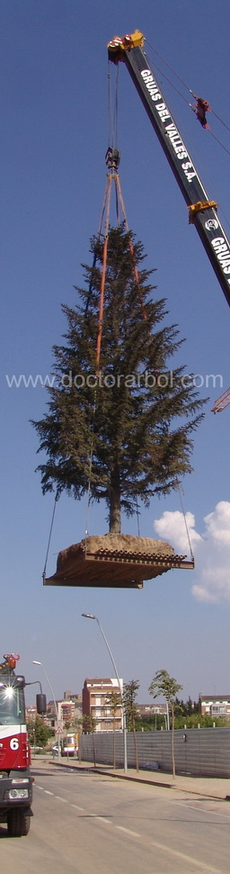 treeplatform_doctorarbol