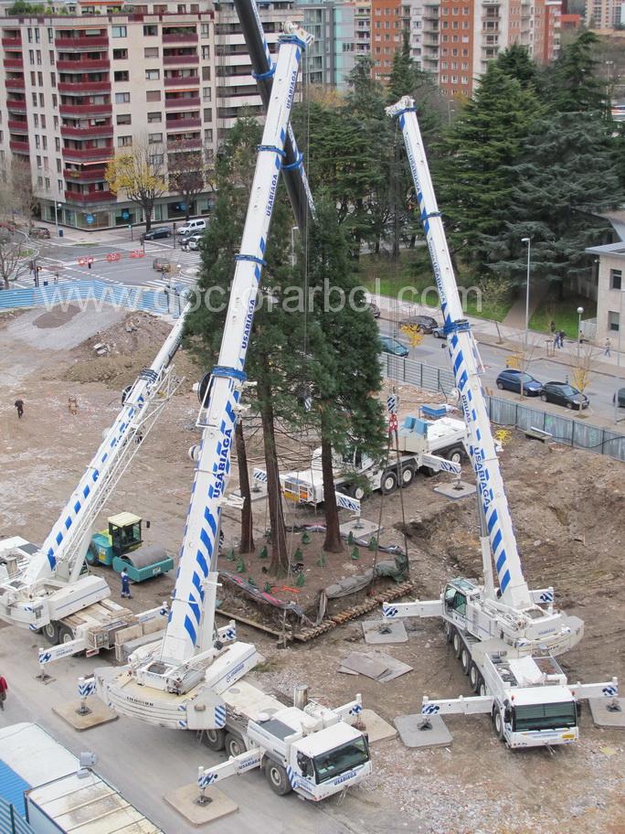 trasplantament d'arbres singulares_doctorarbol