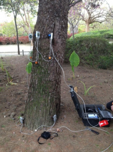 Test de tracción para valorar el riesgo de vuelque de un pino carrasco (Pinus halepensis)