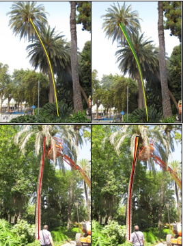 Images collected from the evaluation of two palm trees: the first series with proper swing and the second series with an area of concentration of effort.