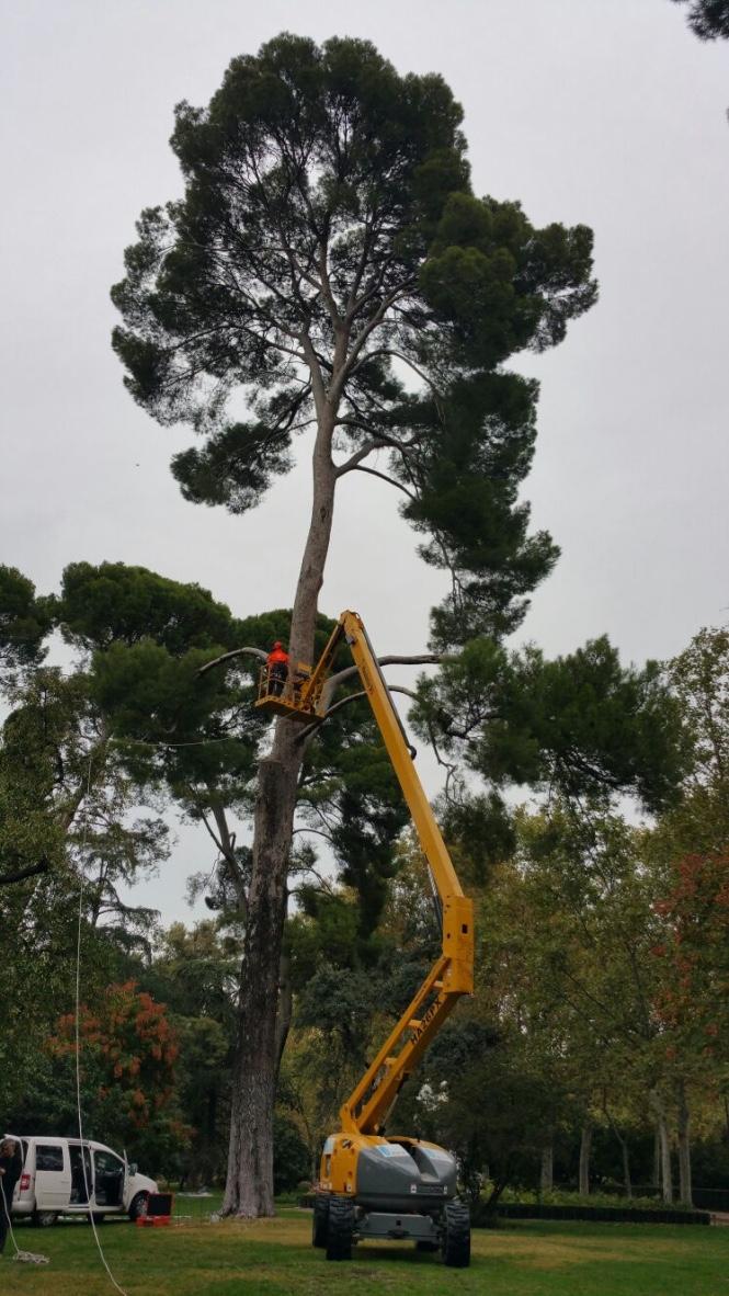 doctorarbol arbres de tardor