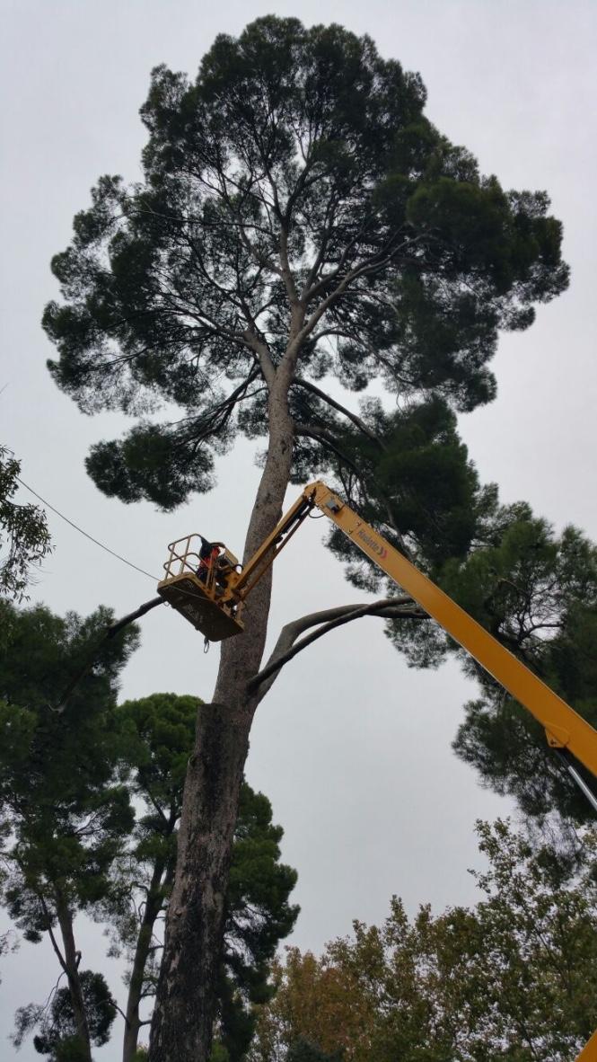 doctorarbol fall trees