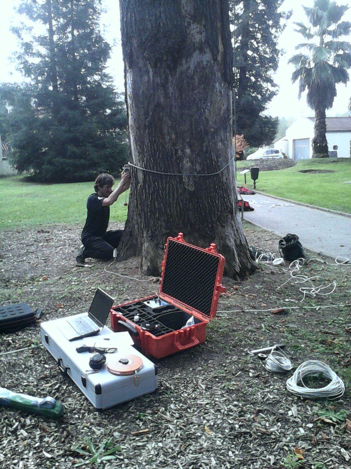 análisis de riesgo árboles