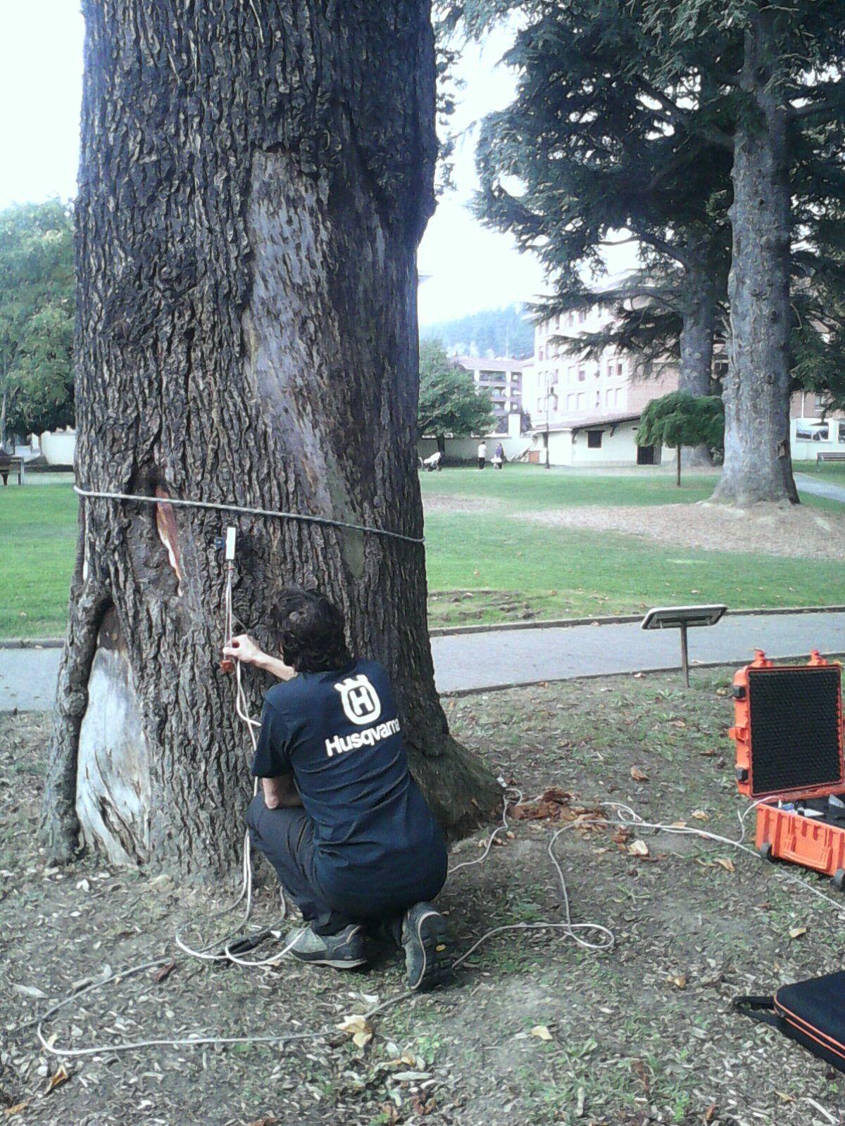 riesgo de caída árboles