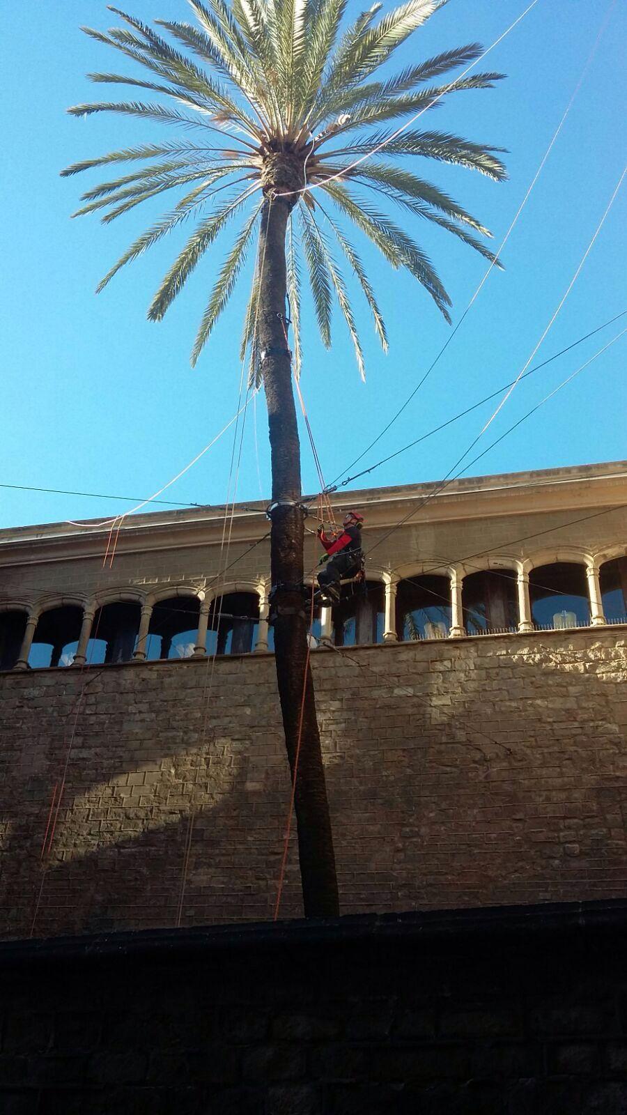 ancoratge palmera